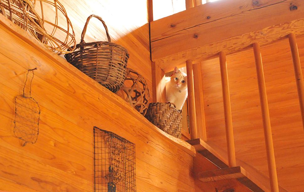 木で統一されたインテリアのナチュラルカラーのカゴと猫