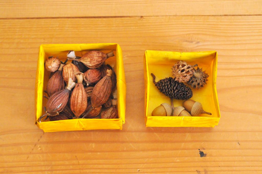 拾って集めた小さな箱の中の小さな木の実