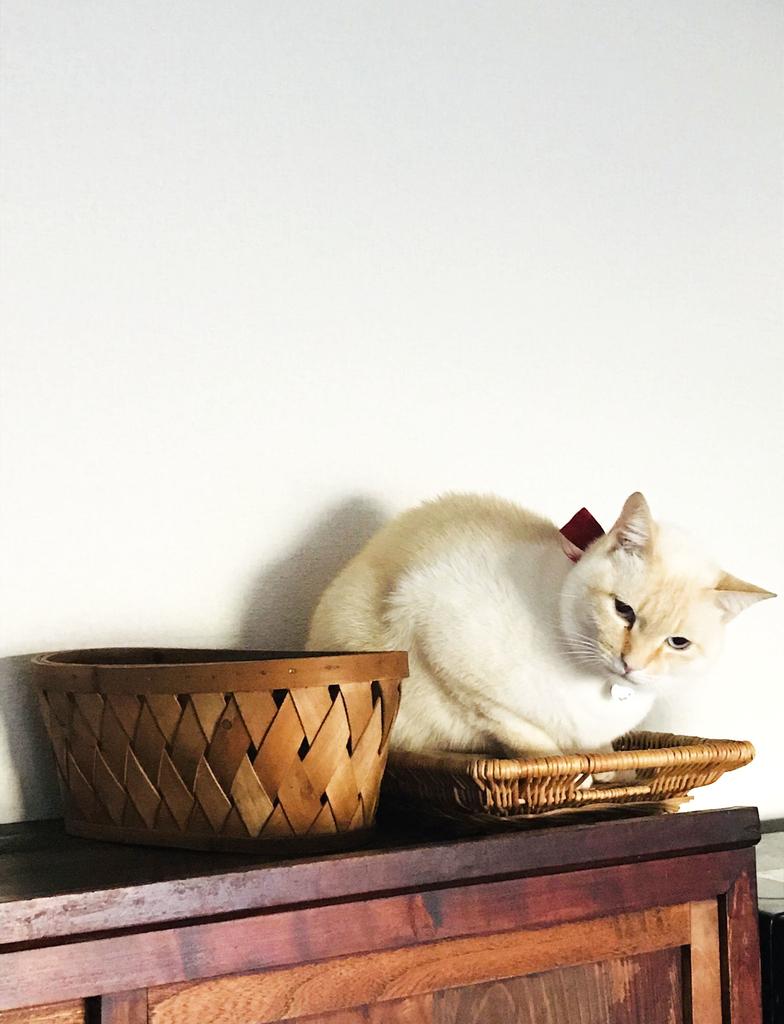 ふるものせいかつ図鑑ー台所でひとりまどろむ猫1匹