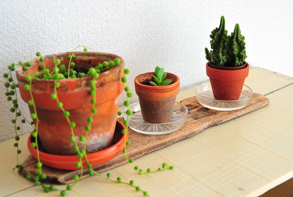 植物を置いた拾ってきた0円流木板はそれだけでオシャレに見える