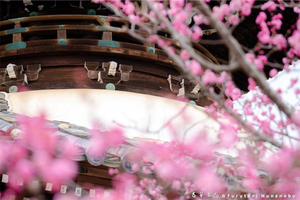f:id:furutanimunenobu:20190210220111j:image