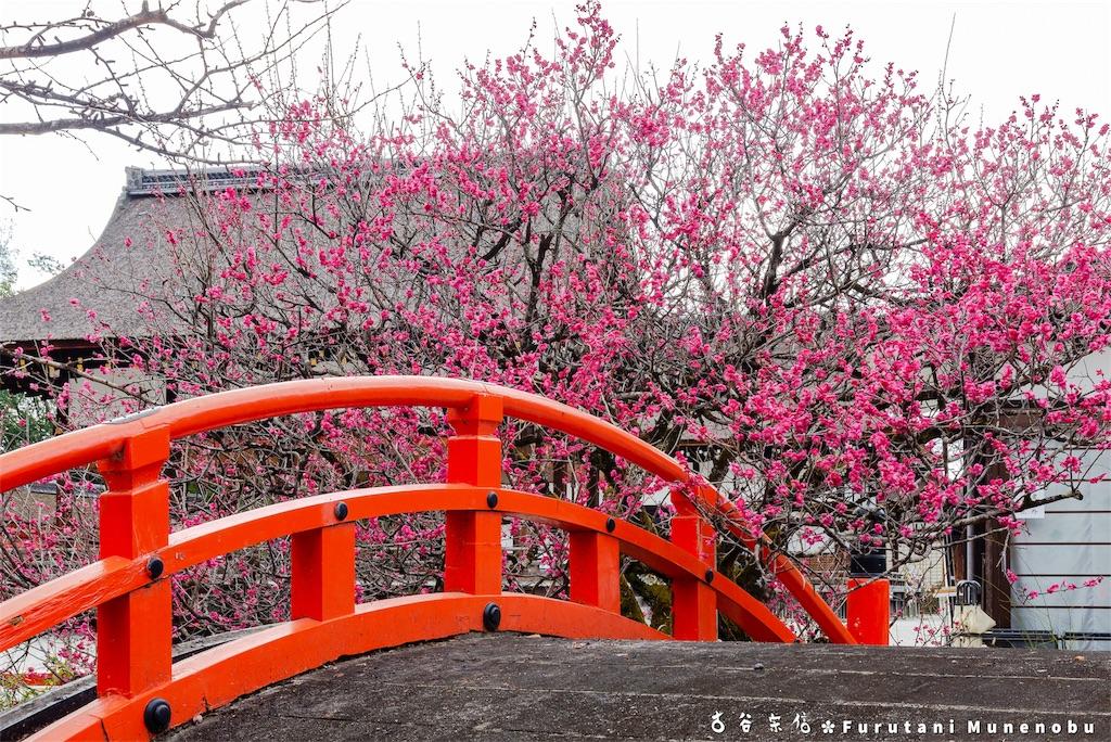 f:id:furutanimunenobu:20190301222456j:image