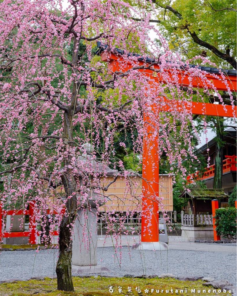 f:id:furutanimunenobu:20190303233202j:image