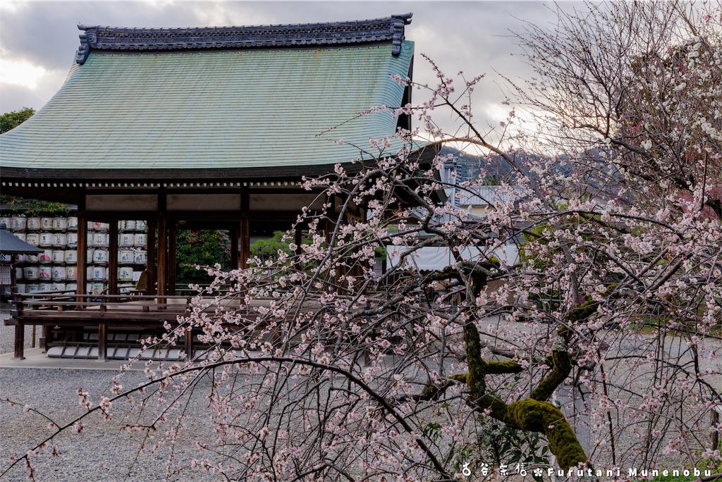 f:id:furutanimunenobu:20190310215114j:image