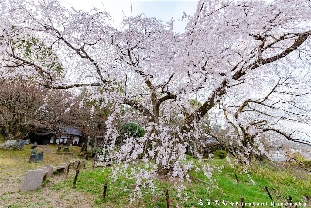 f:id:furutanimunenobu:20190406232351j:image