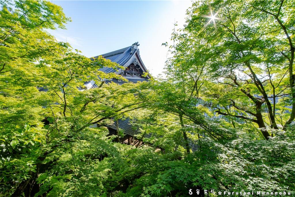 f:id:furutanimunenobu:20190512212752j:image