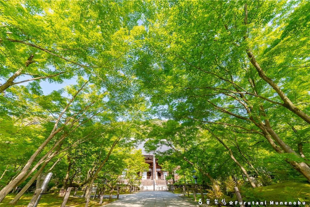f:id:furutanimunenobu:20190512212948j:image