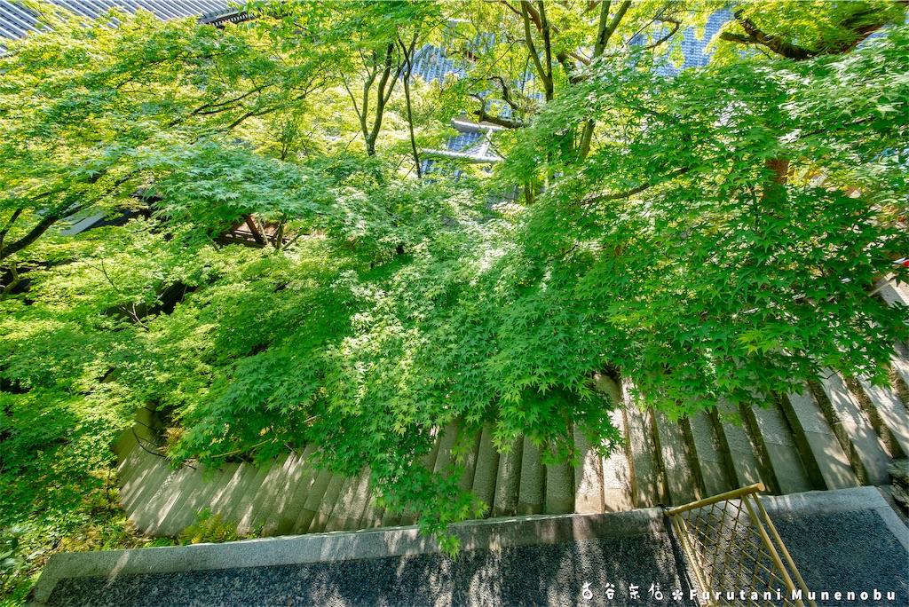 f:id:furutanimunenobu:20190512213004j:image