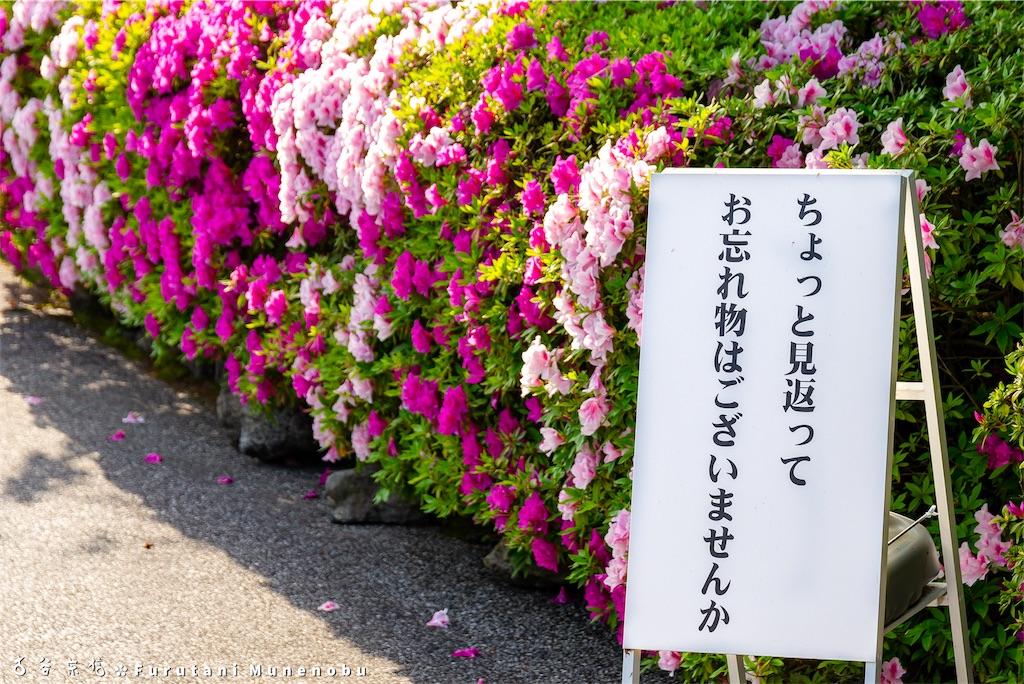f:id:furutanimunenobu:20190513102235j:image