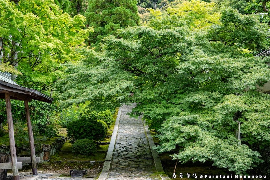 f:id:furutanimunenobu:20190615213949j:image