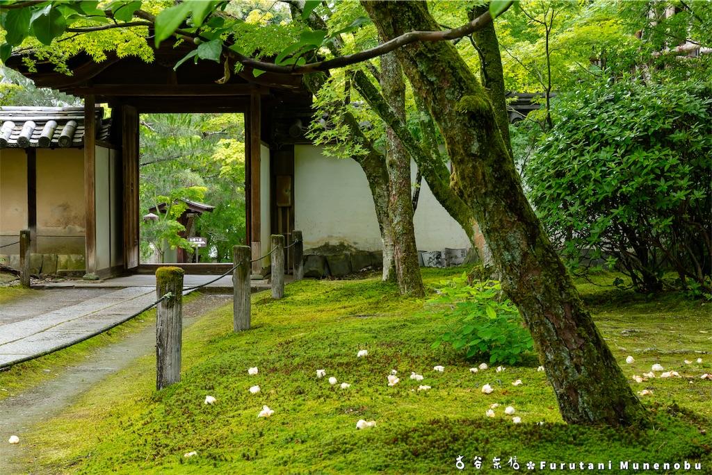 f:id:furutanimunenobu:20190615214002j:image