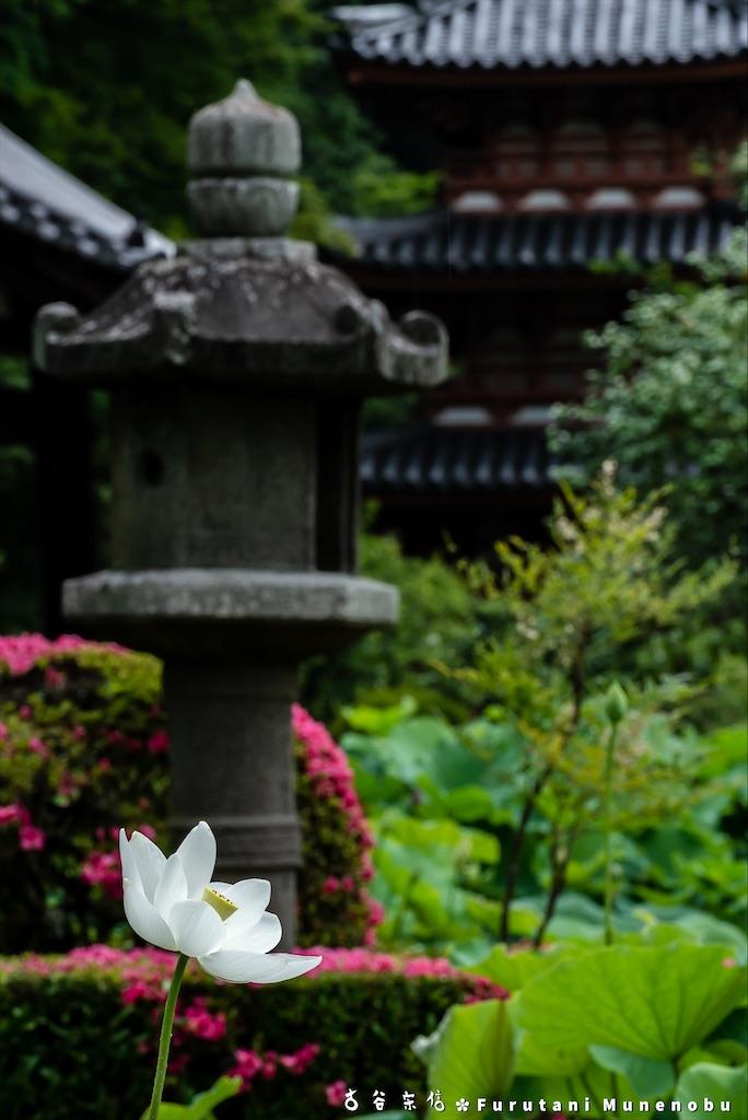 f:id:furutanimunenobu:20200622205709j:image