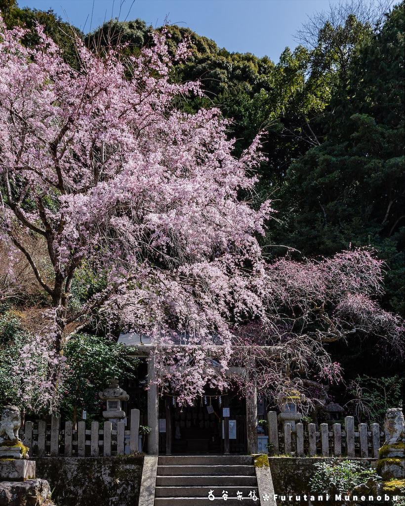 f:id:furutanimunenobu:20210414205603j:image