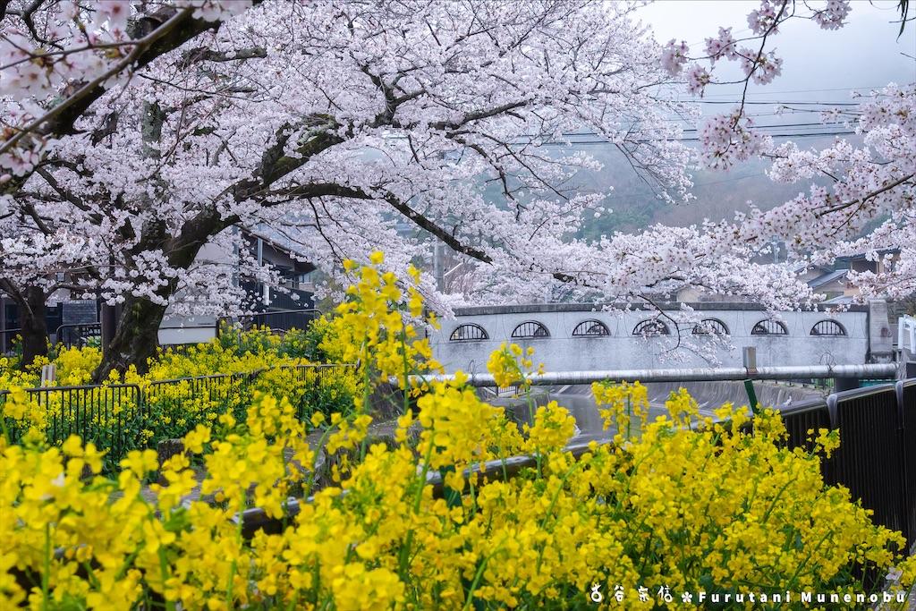 f:id:furutanimunenobu:20210428213114j:image