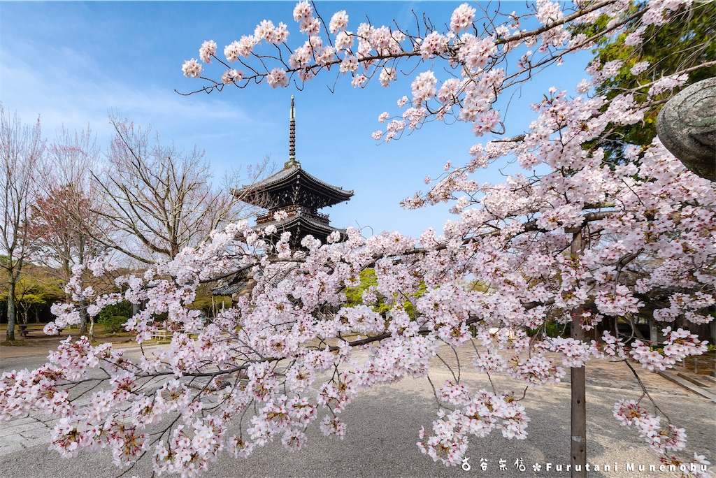 f:id:furutanimunenobu:20210428213121j:image