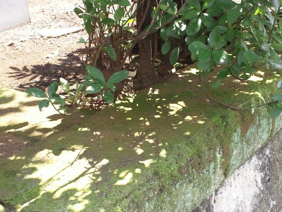 f:id:furuyatoshihiro:20110811034710j:image