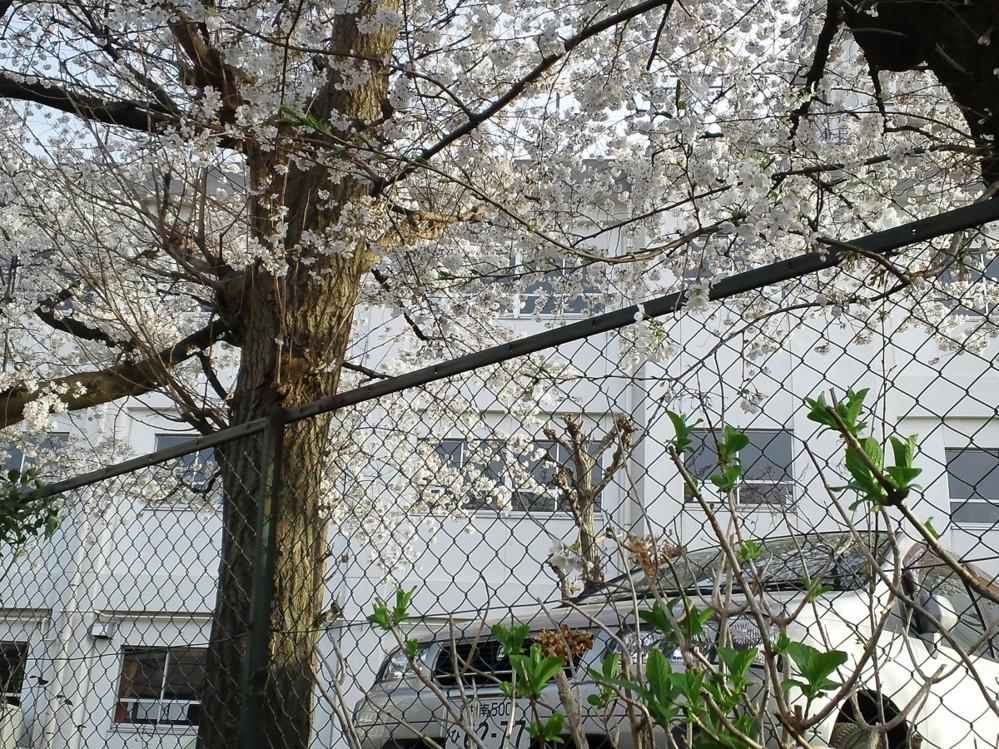 f:id:furuyatoshihiro:20130401212105j:image