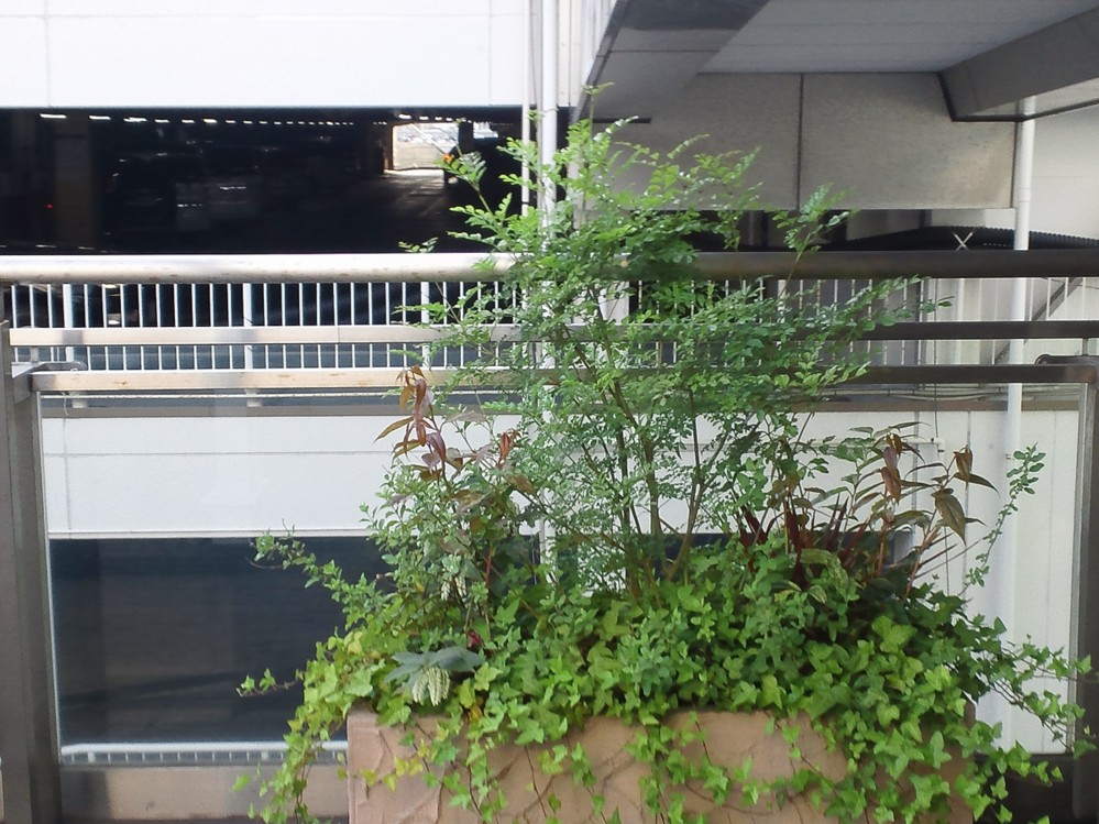 f:id:furuyatoshihiro:20150602225736j:image