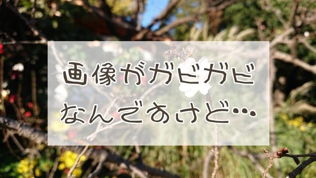 f:id:fusani:20181119235438j:plain