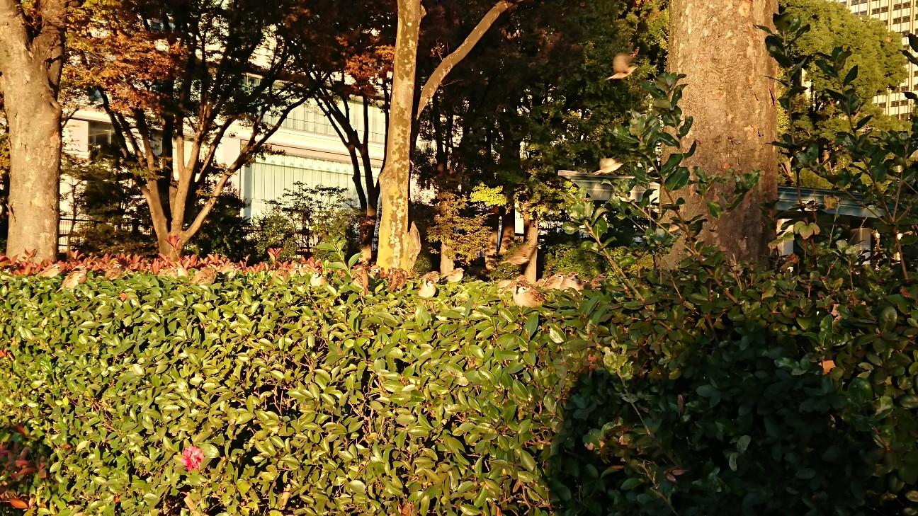 f:id:fusani:20181120183720j:plain
