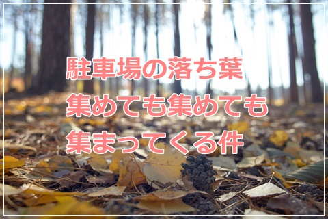 f:id:futarigurashi:20161125011500j:plain