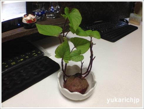 f:id:futarigurashi:20171103172816j:plain