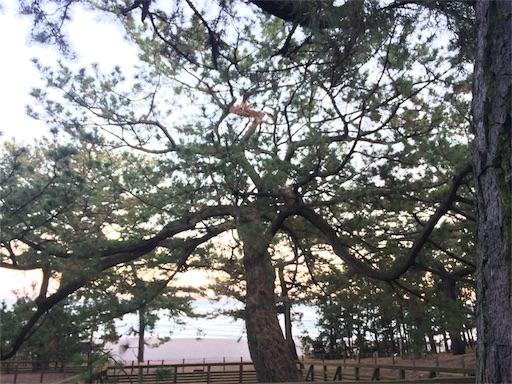 f:id:fuufu2:20170103200505j:image