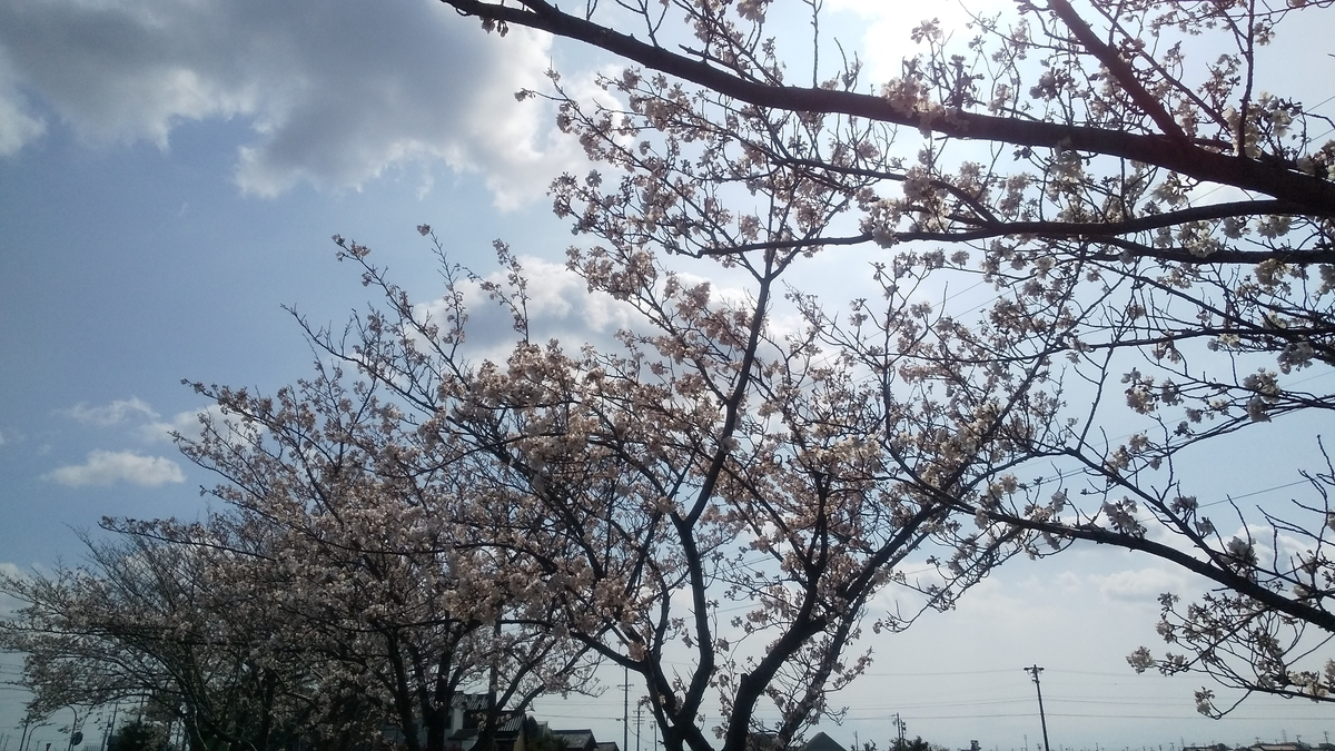 f:id:fuura-sun:20200403115742j:plain