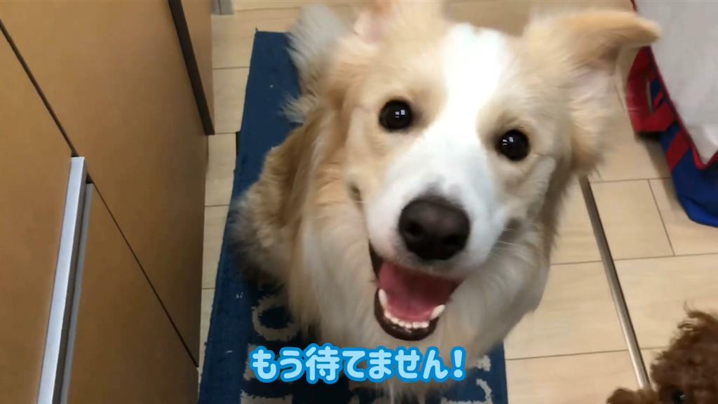 f:id:fuuraitenki:20191225064316p:image