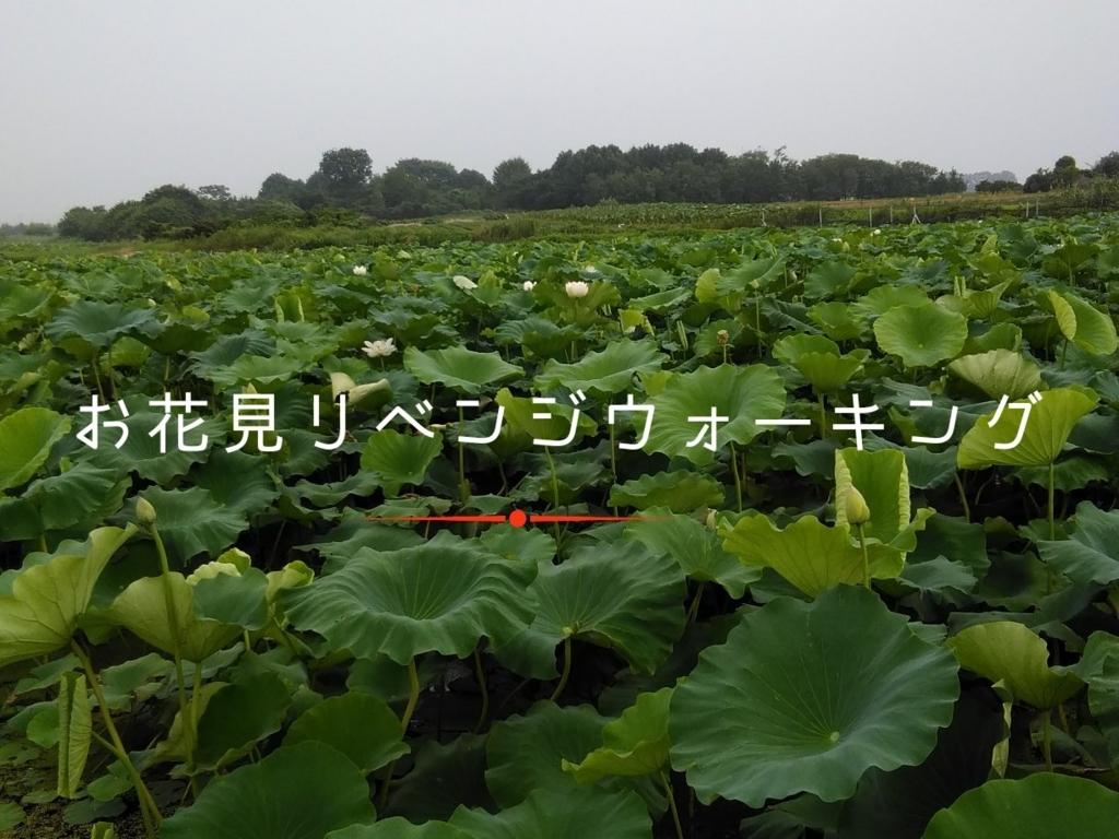 f:id:fuuta09neko:20180716070517j:plain