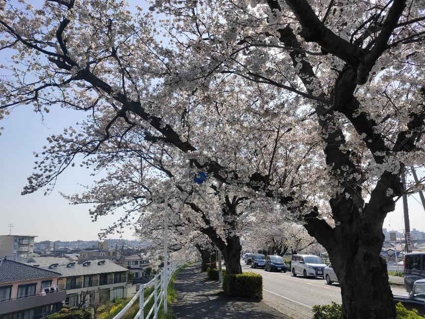f:id:fuuta09neko:20210328152810j:plain