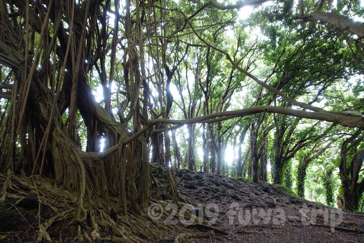 f:id:fuwa-trip:20200127105554j:plain