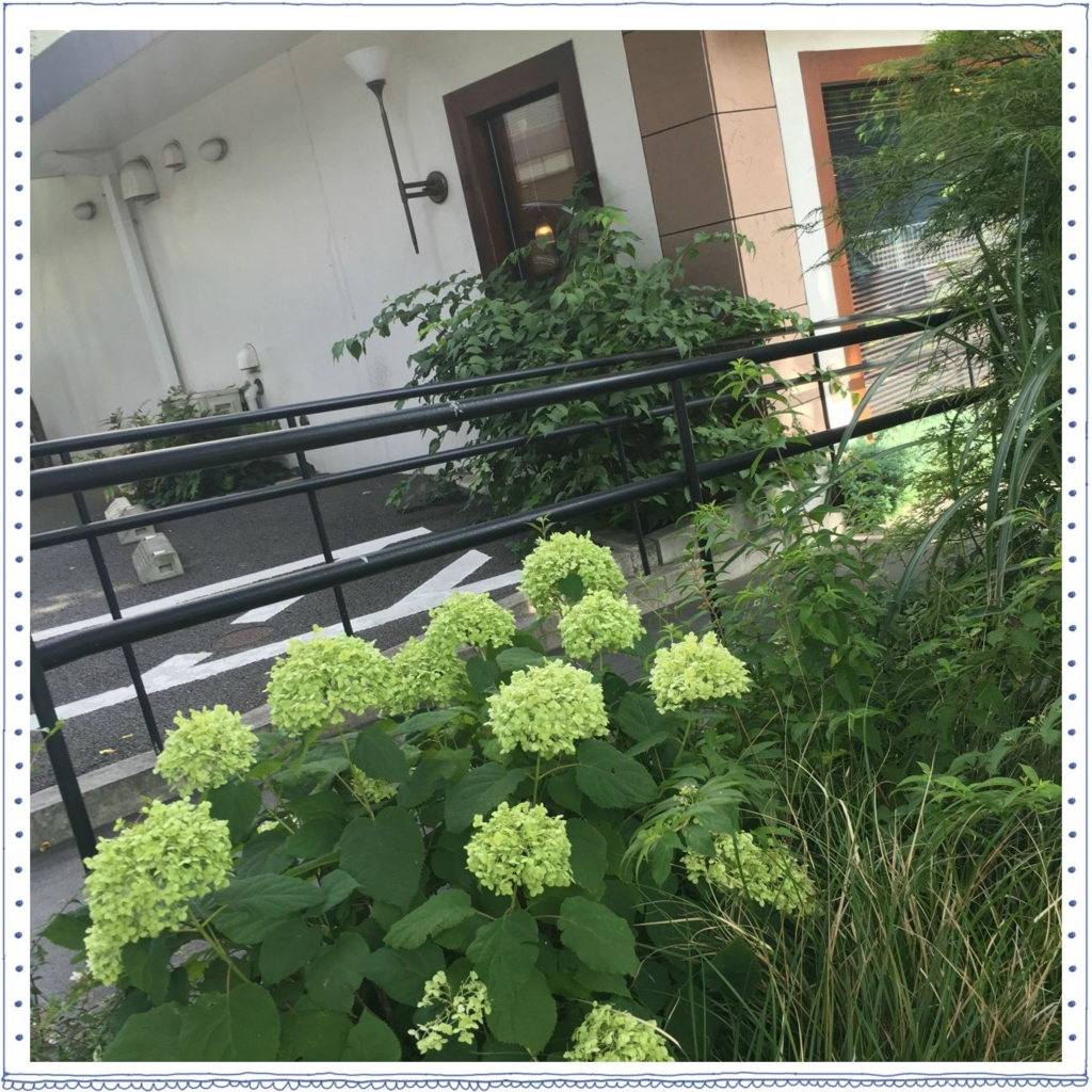 f:id:fuwafu-wanko:20160704173706j:plain