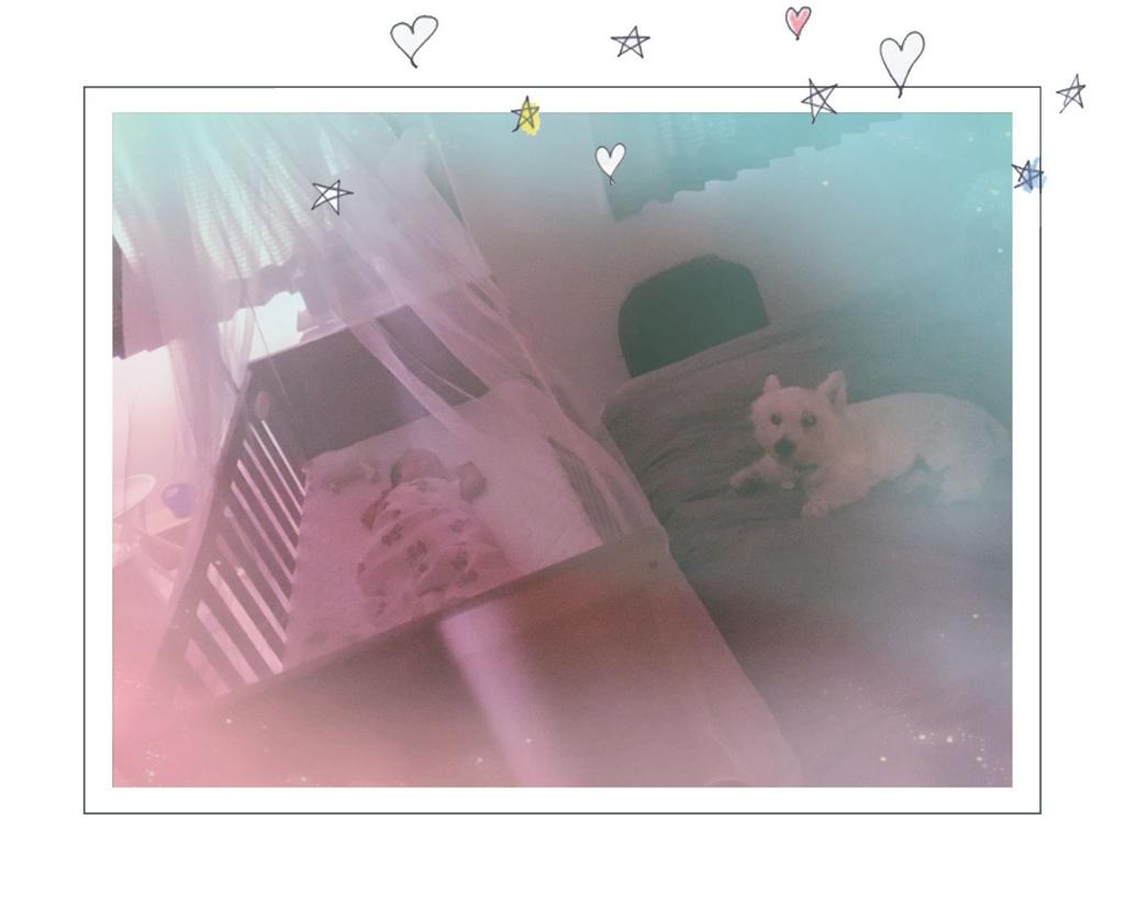 f:id:fuwafu-wanko:20160914203944j:plain