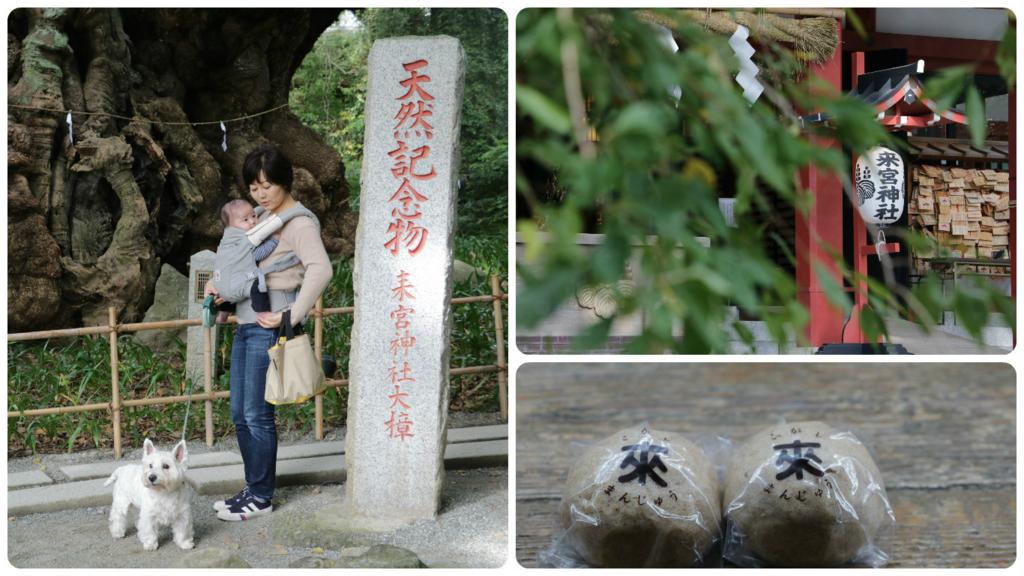 f:id:fuwafu-wanko:20161113212641j:plain