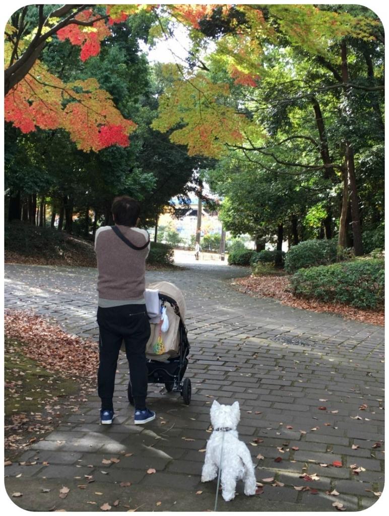 f:id:fuwafu-wanko:20161120222930j:plain
