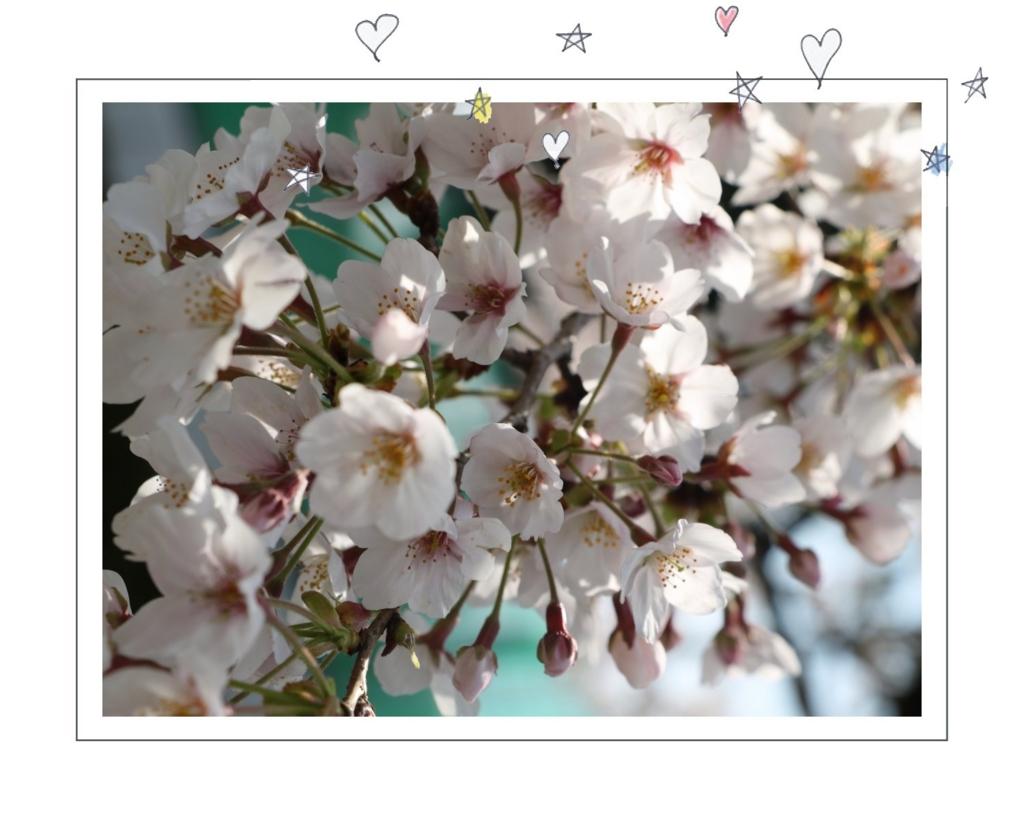 f:id:fuwafu-wanko:20170404140836j:plain