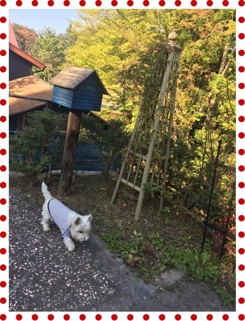 f:id:fuwafu-wanko:20171103221755j:plain