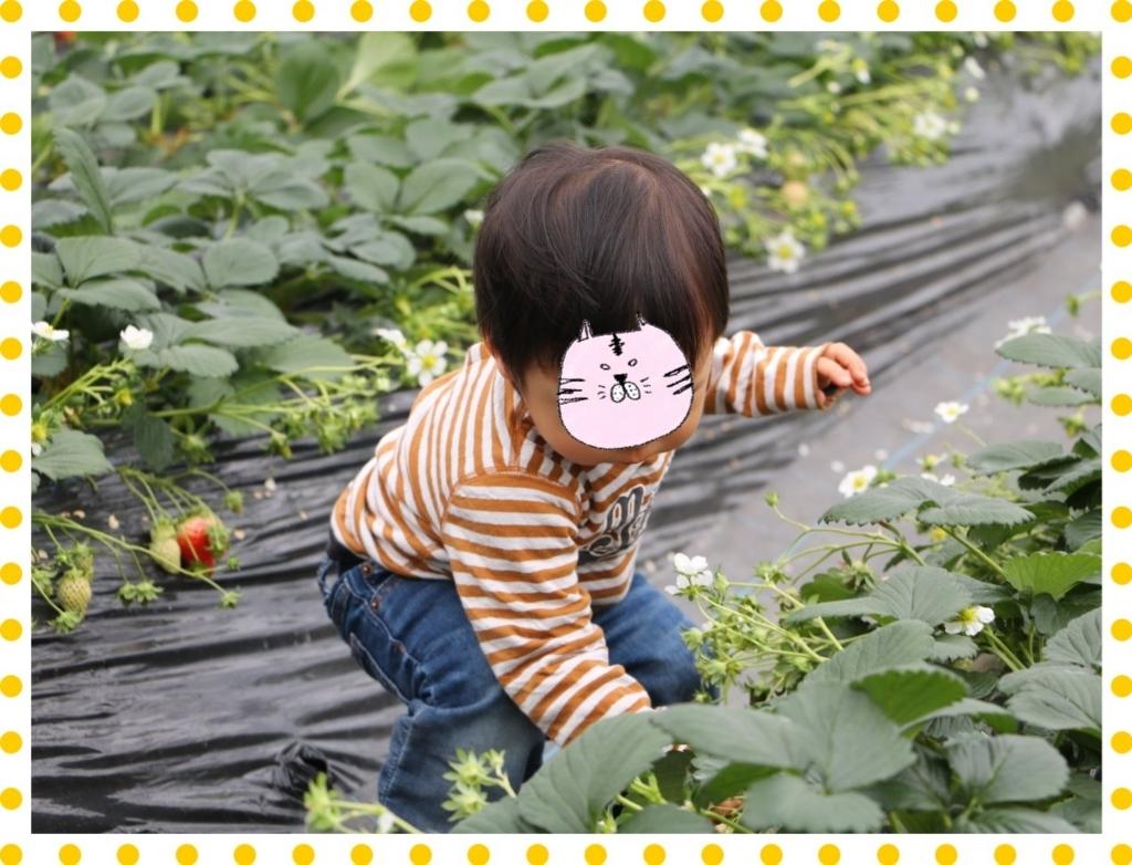f:id:fuwafu-wanko:20180203232647j:plain