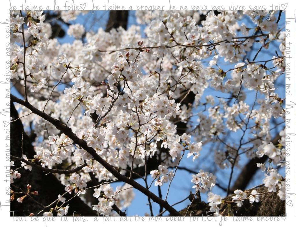f:id:fuwafu-wanko:20180403000928j:plain