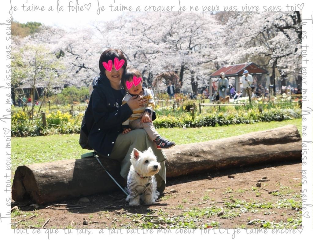 f:id:fuwafu-wanko:20180403001526j:plain