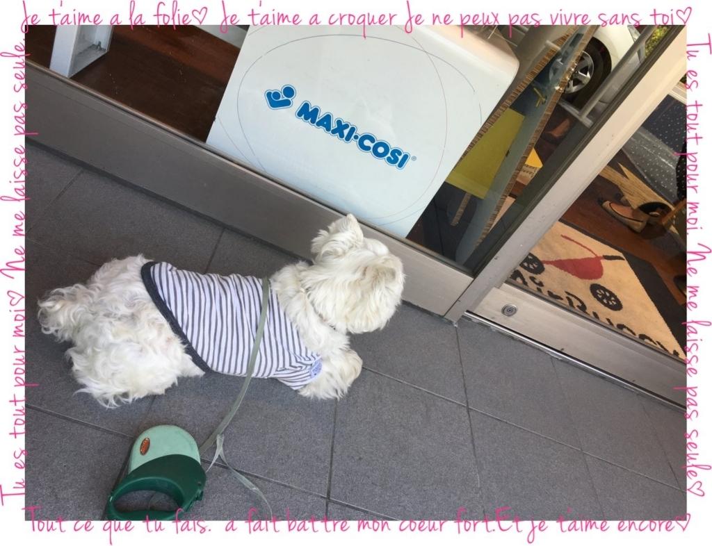 f:id:fuwafu-wanko:20180403001714j:plain