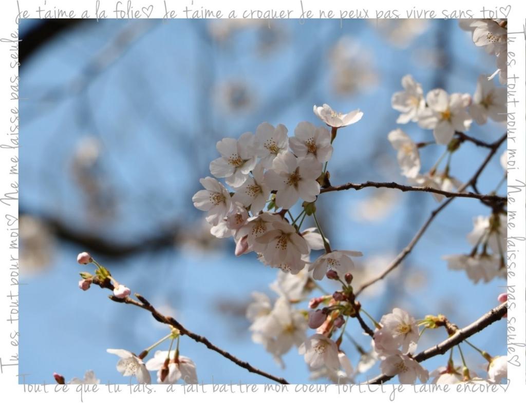 f:id:fuwafu-wanko:20180403003804j:plain