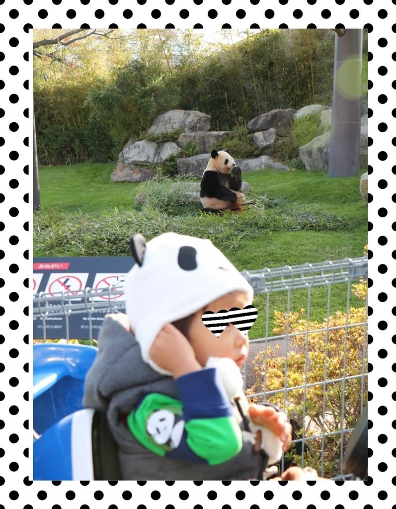 f:id:fuwafu-wanko:20190117224950j:plain
