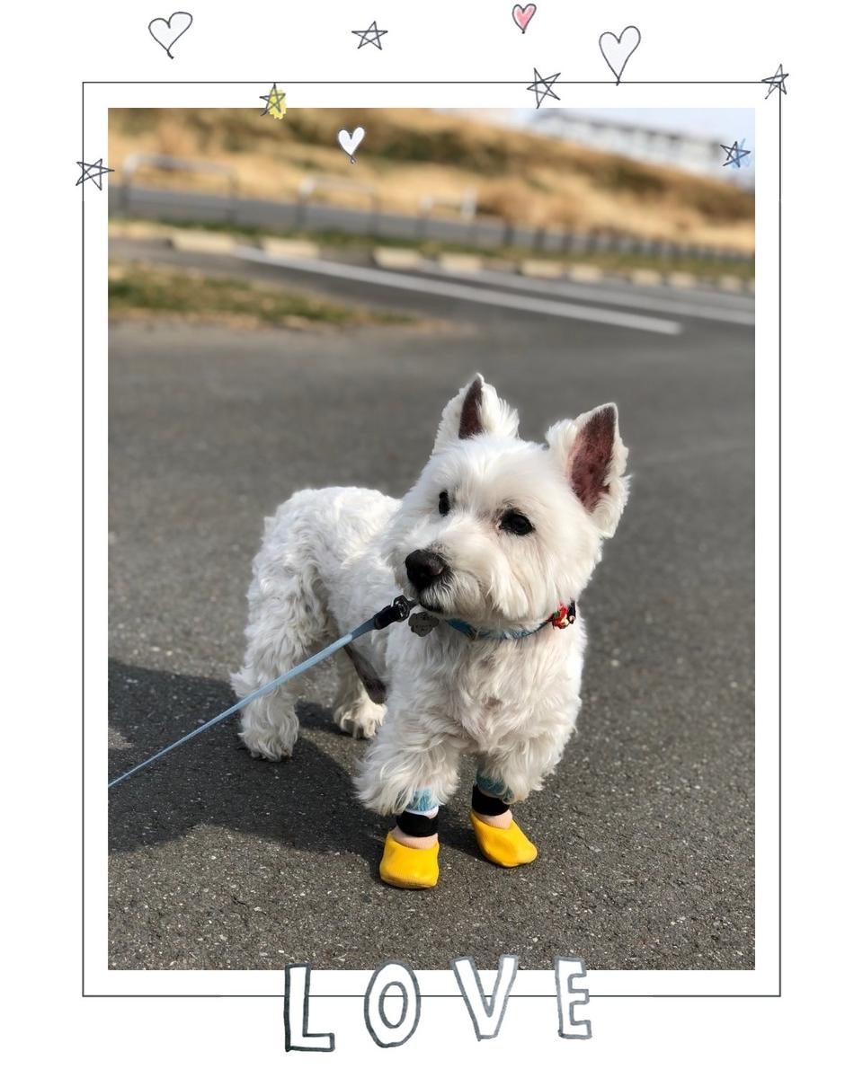 f:id:fuwafu-wanko:20190424232533j:plain