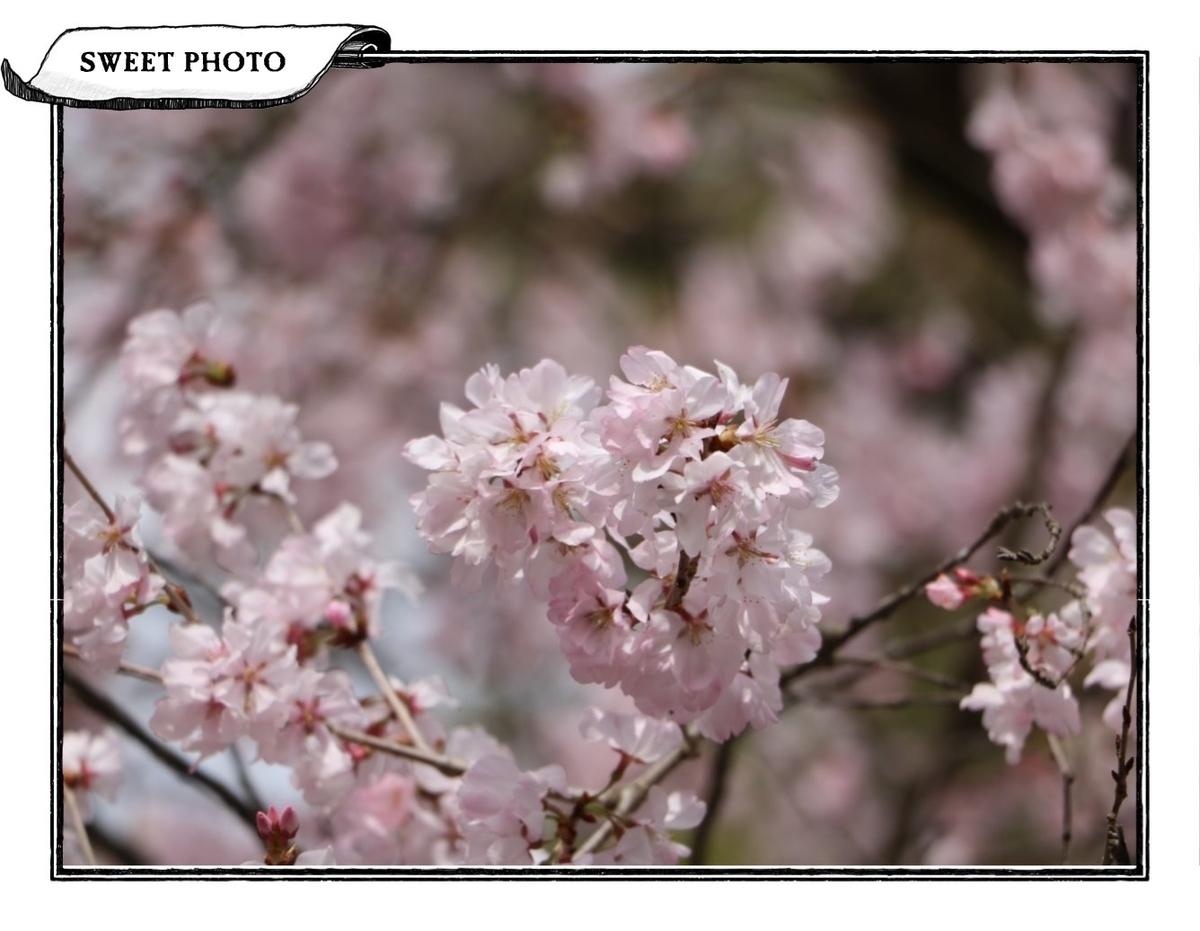 f:id:fuwafu-wanko:20190526224440j:plain