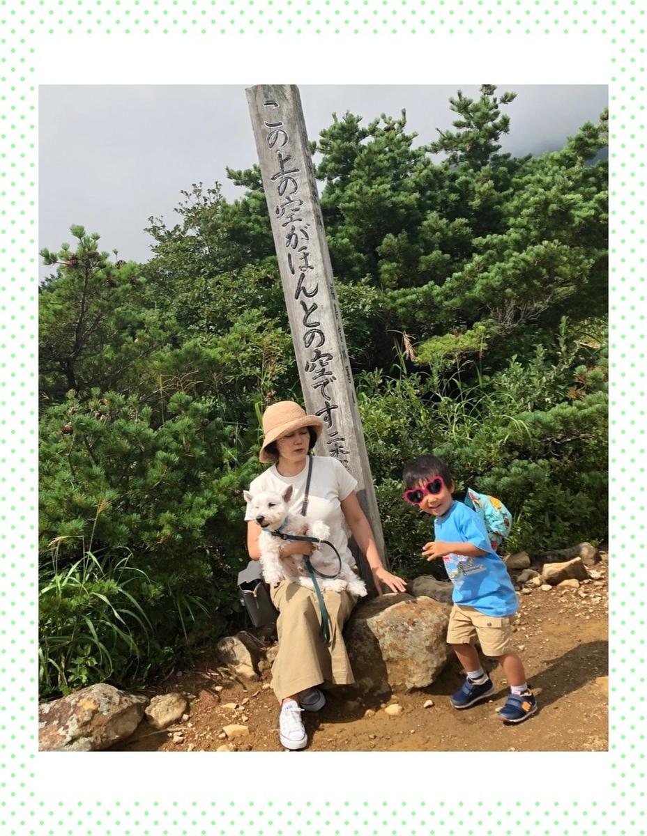 f:id:fuwafu-wanko:20191116221737j:plain