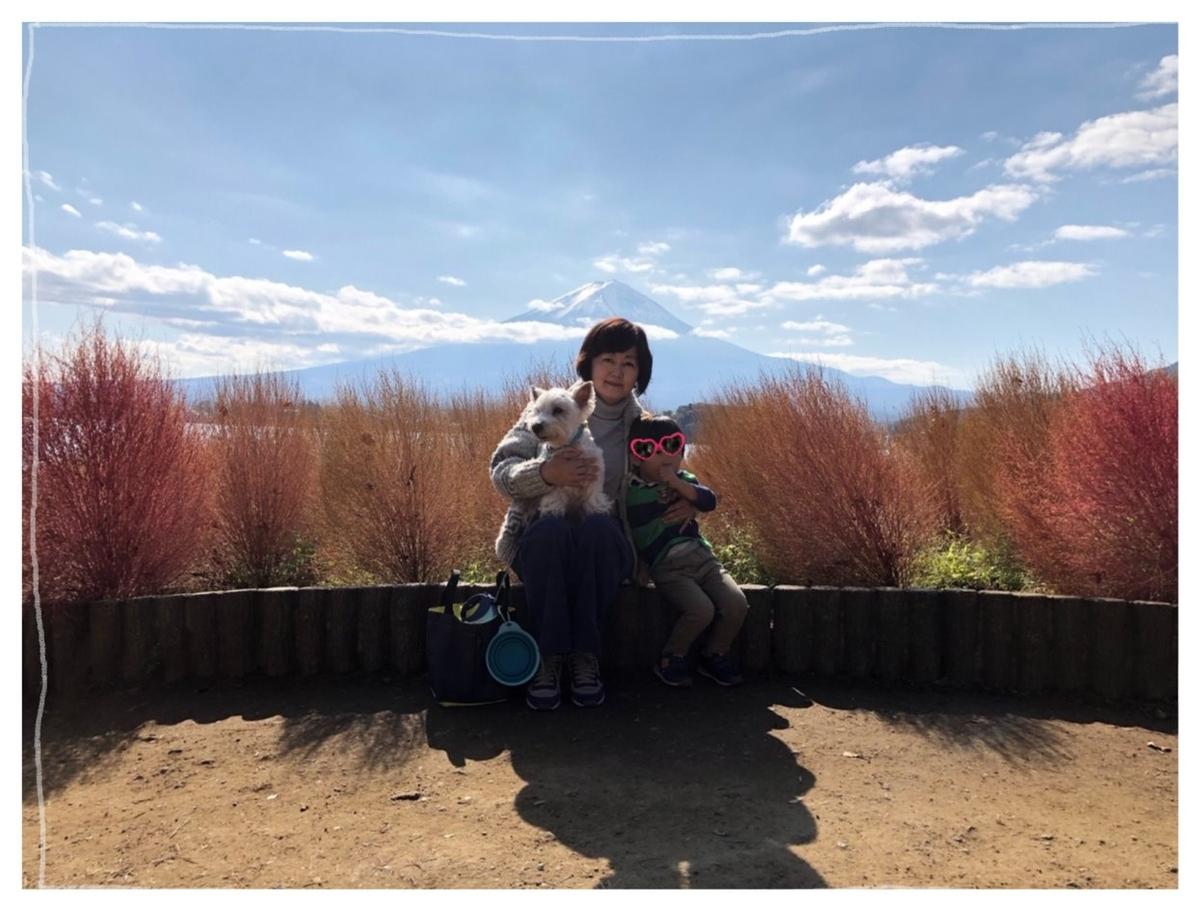 f:id:fuwafu-wanko:20191209214732j:plain