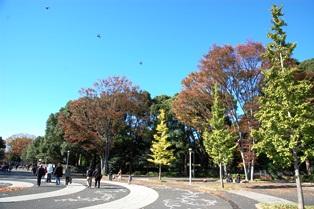 f:id:fuwakudejokyo:20121119013530j:image