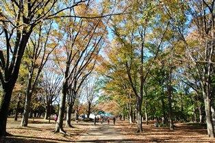 f:id:fuwakudejokyo:20121119013614j:image